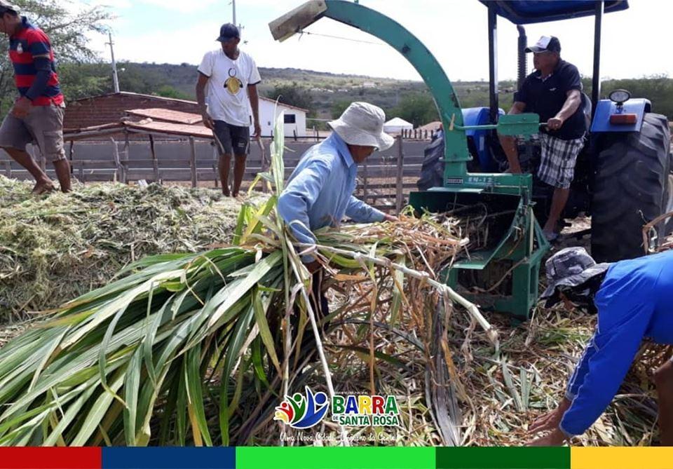 Secretaria de Agricultura continuam com as atividades de ensilagem