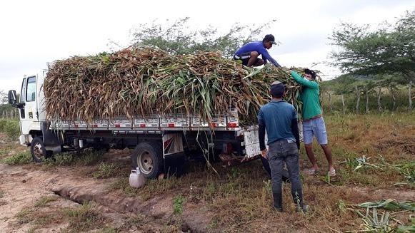 Secretaria de Agricultura realizou atividade de ensilagem na propriedade no Assentamento Cabaças
