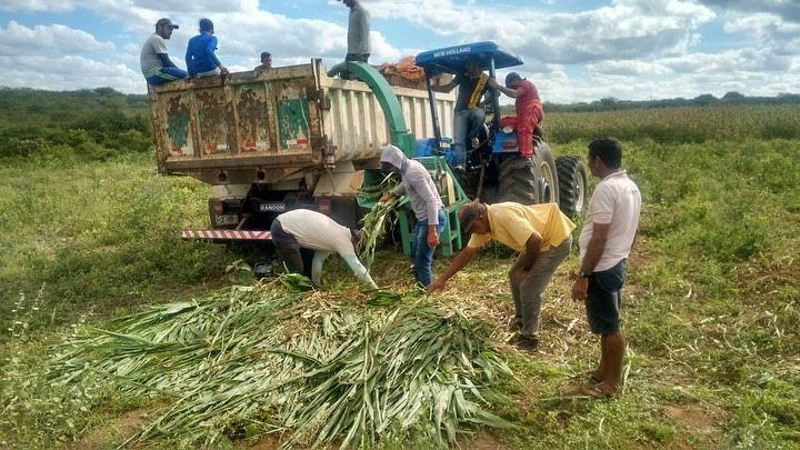 Secretaria de Agricultura inicia primeira etapa de produção de silagem no Assentamento Santa Rosa (Ubaia)